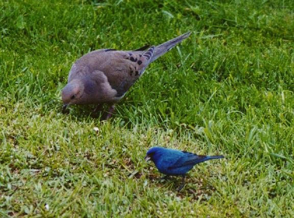 backyard birds sheboygan wisconsin photos by galen r frysinger